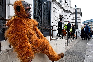 demonstrator dressed up as a gorilla